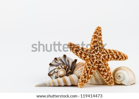 A sugar starfish and various seashells. - stock photo