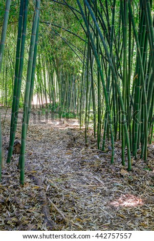 A summer path through a bamboo forest - stock photo