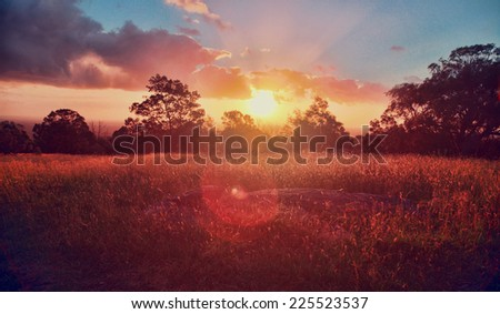 A sun setting over trees and a field. - stock photo