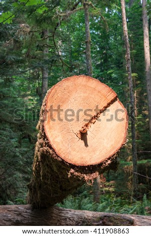 A sunlit cut end of a log in a lush green forest - stock photo