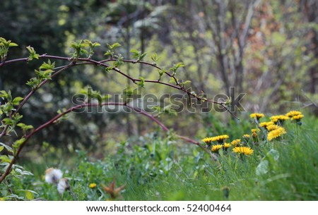 A sunny wildflower meadow in spring - stock photo