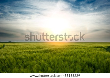 A sunset over a wheat field - stock photo