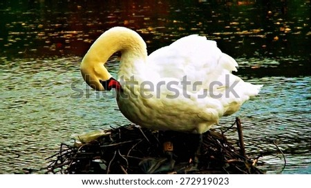A swan on her nest digitally painted - stock photo