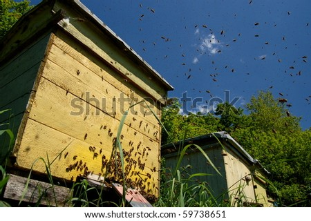 A swarm of bees in apiary - stock photo