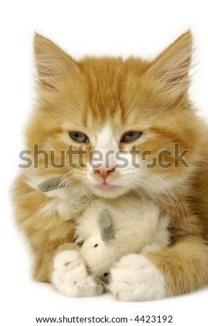 A sweet kitten is holding a toy mouse. - stock photo