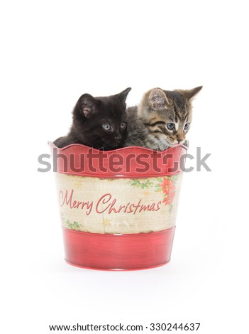 A tabby and black kitten sitting inside of Christmas bucket isolated on white background - stock photo