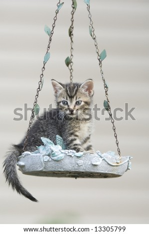 A tabby kitten sits inside of a hanging birdfeeder in the backyard of a home - stock photo