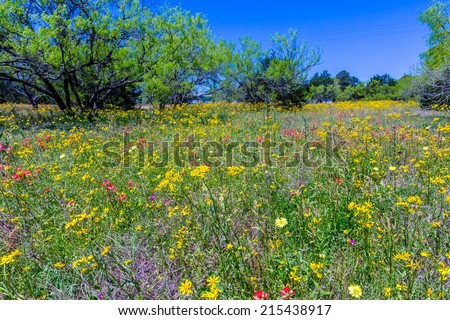 A Texas Field Full of a Variety of Beautiful Wildflowers - stock photo