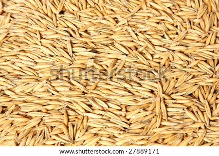 A Texture of oats seeds - stock photo