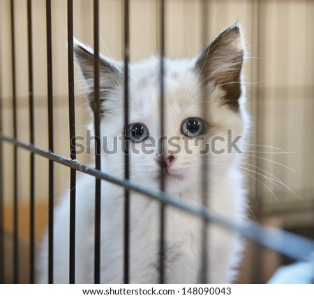 a tiny kitten in an animal shelter, waiting for a home - stock photo