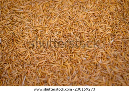 A Ton of meal worm larvae for feeding birds reptiles or fish  - stock photo