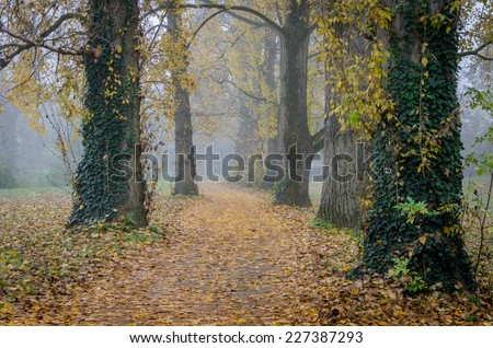 A trail in the park with autumn leaves on a foggy day - stock photo