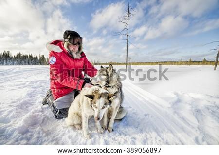 """A traveler Fyodor Konyukhov harnesses dog team. Russia, Arkhangelsk region, """"Onega Pomorie"""" National Park. February 2016 - stock photo"""