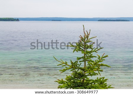 A tree at the waterfront at a lake in Cape Breton. There is copy space. - stock photo