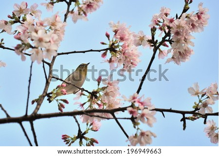 A tree branch with blossoms and a bird sitting on the limb. - stock photo