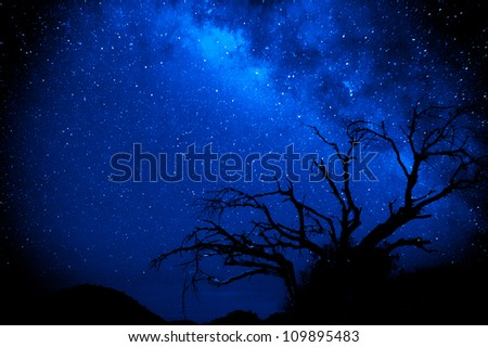 A tree is silhouetted against the beauty of the milky way in a dark sky location - stock photo