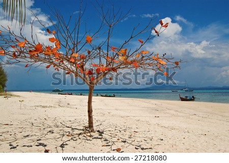 A tree on a tropical beach - stock photo