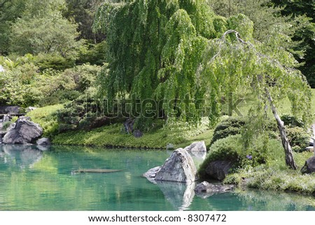 A tree's weeping limbs over a pool in an Asian garden. - stock photo