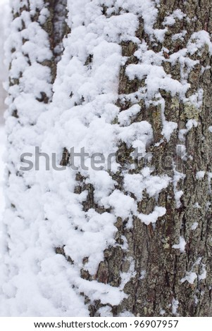 A Tree Trunk With Fluffy New Snow On It - stock photo