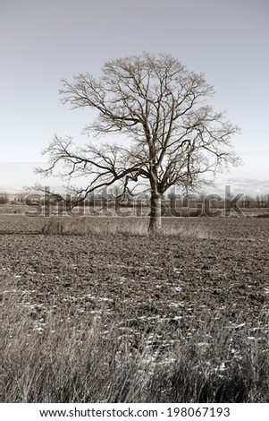 A tree with bare limbs in the middle of a field. - stock photo