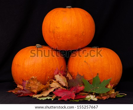 A trio of pumpkins against a black background. - stock photo