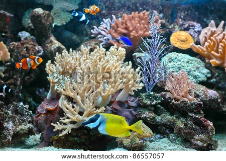 A tropical fishes and anemone in aquarium - stock photo