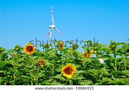 A turbine overlooking a sunflower field - stock photo