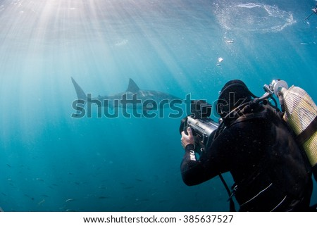 A underwater videographer filming a great white shark in open water with clear light rays penetrating the water. - stock photo