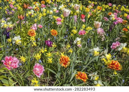 A variety of different colorful flowers in the field - stock photo