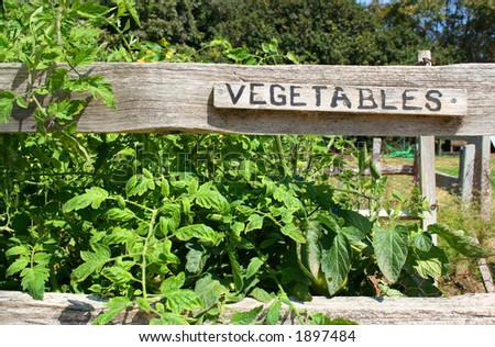 """A vegetable garden with a sign that reads """"vegetables."""" - stock photo"""