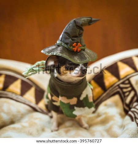 A very little puppy  sitting sadly and wearing a witch's hat - stock photo