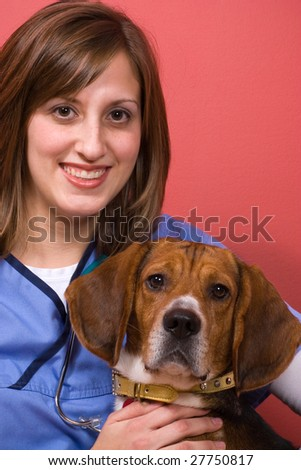 A veterinarian posing with a purebred beagle dog. - stock photo