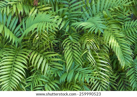A vibrant, colorful green foliage background  - stock photo