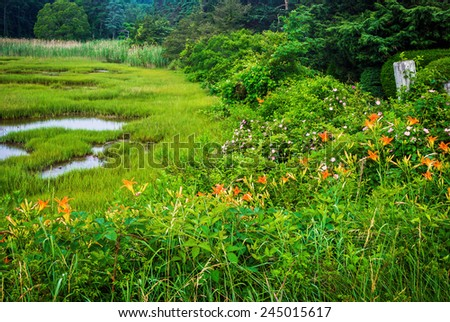 A view of a Cape Cod wetland with tiger lilies and wildflowers in Osterville, Massachusetts. - stock photo