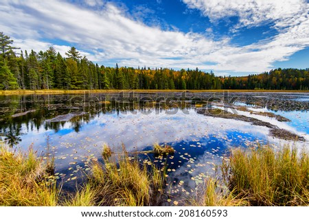 A view of a pond in a forest during the autumn season.  Scene from Beaver Pond Trail, Algonquin Park, Ontario, Canada.  - stock photo
