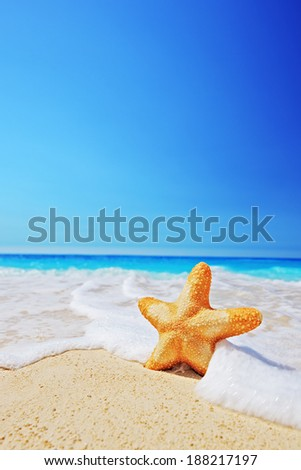 A view of a starfish on a beach with clear sky and wave, Greece - stock photo