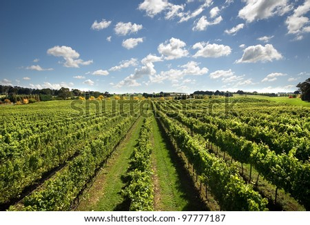 A view of a vineyard, growing cold-climate wines, near Sutton Forest, on the Southern Highlands of New South Wales, Australia - stock photo