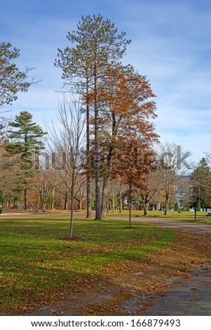 A view of the trees and leaves on the ground at the city park in Belfast Maine in the late fall. - stock photo