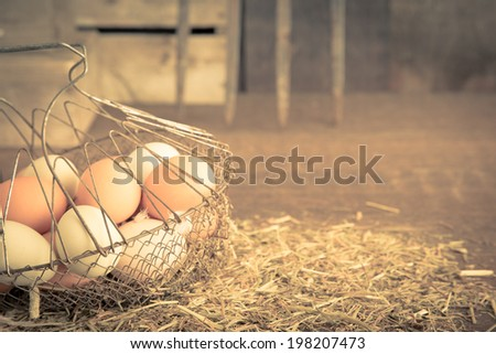 A vintage feeling image of freshly collected farm eggs in a basket in a chicken coop with copy space. - stock photo