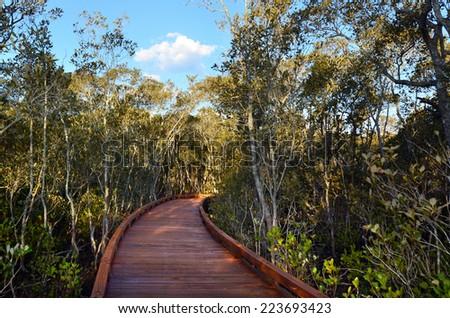 A walking path over mangrove swamp habitat in Coombabah wetlands in Gold Coast Queensland, Australia. - stock photo