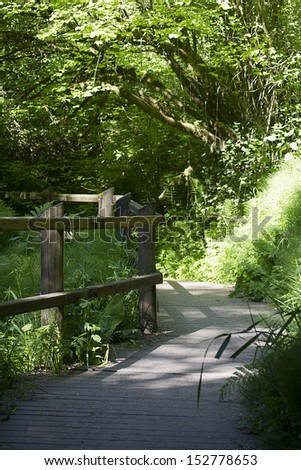A walking trail in the woods for walking and jogging. - stock photo