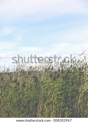 A wall of sea hay and behind is the blue sky. Image has a vintage effect applied. - stock photo