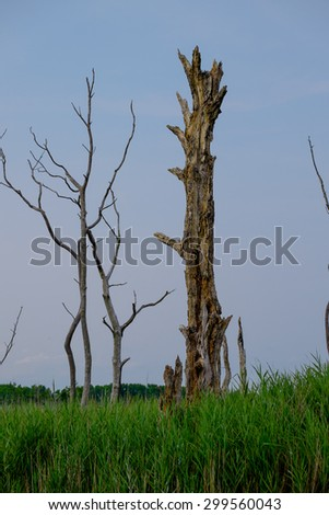 A water logged dead tree sits in a marshy bog in wetlands - stock photo