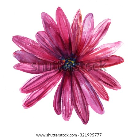 A watercolor drawing of a purple daisy on white background - stock photo