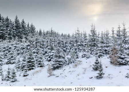 A weak sun shining through cloud onto snow covered fir trees - stock photo