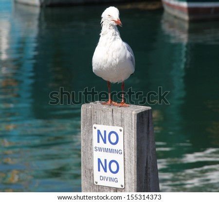 A wet seagull standing on a sign post. - stock photo