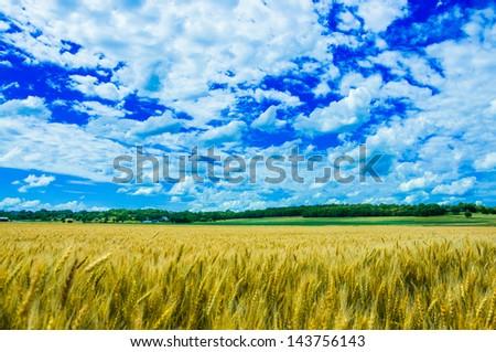 A wheat farm in sunny day in Kansas, USA - stock photo