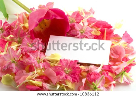A white business card rests on a bed of pink and yellow petals with a lovely tulip resting nearby. - stock photo