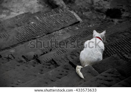 A white cat on the black stairs - stock photo