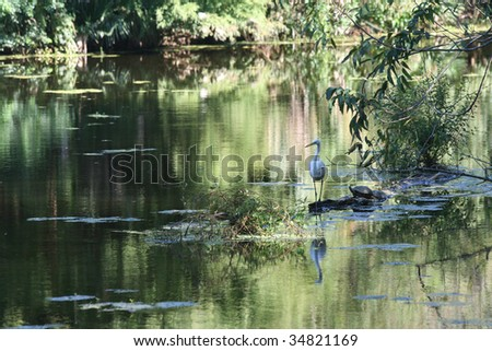 A white Egret and a turtle share a log in a Louisiana Bayou Swamp. - stock photo